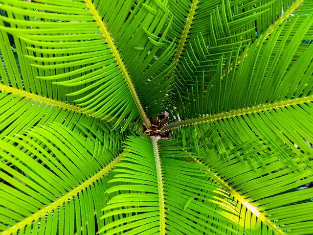 Palmy v bytě