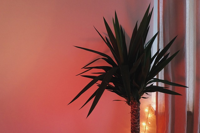 palma v místnosti