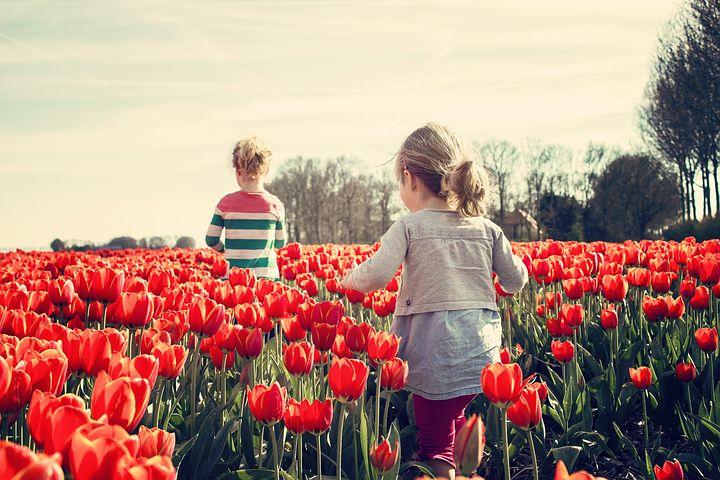 pozemek s tulipány